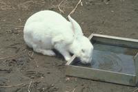 ウサギ 23018029860| 写真素材・ストックフォト・画像・イラスト素材|アマナイメージズ