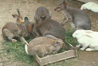 ウサギ 23018029861| 写真素材・ストックフォト・画像・イラスト素材|アマナイメージズ