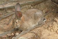 ウサギ 23018029864| 写真素材・ストックフォト・画像・イラスト素材|アマナイメージズ