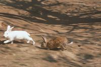 ウサギ 23018029882| 写真素材・ストックフォト・画像・イラスト素材|アマナイメージズ