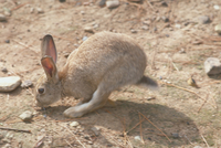 ウサギ 23018029889| 写真素材・ストックフォト・画像・イラスト素材|アマナイメージズ