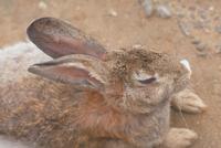 ウサギ 23018029890| 写真素材・ストックフォト・画像・イラスト素材|アマナイメージズ