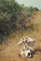 アフリカゾウ 23018030115| 写真素材・ストックフォト・画像・イラスト素材|アマナイメージズ