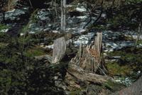 ニホンリス 23018030748| 写真素材・ストックフォト・画像・イラスト素材|アマナイメージズ