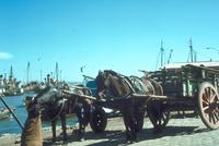 ウマ(馬車) 23018031205| 写真素材・ストックフォト・画像・イラスト素材|アマナイメージズ