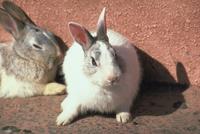 ウサギ 23018031396| 写真素材・ストックフォト・画像・イラスト素材|アマナイメージズ