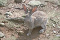 ウサギ 23018031397| 写真素材・ストックフォト・画像・イラスト素材|アマナイメージズ