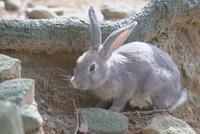 ウサギ 23018031412| 写真素材・ストックフォト・画像・イラスト素材|アマナイメージズ