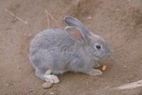 ウサギ 23018031413| 写真素材・ストックフォト・画像・イラスト素材|アマナイメージズ