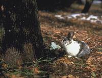 ウサギ 23018032578| 写真素材・ストックフォト・画像・イラスト素材|アマナイメージズ