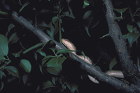 シマヘビ 23018033113| 写真素材・ストックフォト・画像・イラスト素材|アマナイメージズ