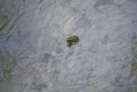 オオヒキガエル 23018034671| 写真素材・ストックフォト・画像・イラスト素材|アマナイメージズ