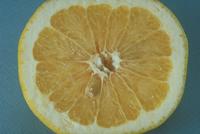 グレープフルーツ 23018039928| 写真素材・ストックフォト・画像・イラスト素材|アマナイメージズ