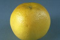 グレープフルーツ 23018040169| 写真素材・ストックフォト・画像・イラスト素材|アマナイメージズ