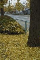イチョウ 23018043971  写真素材・ストックフォト・画像・イラスト素材 アマナイメージズ