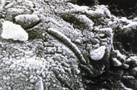 火星由来の隕石中の微生物