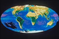 地球表面の植物群