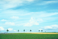 ジャガイモ畑 北海道 23018053771| 写真素材・ストックフォト・画像・イラスト素材|アマナイメージズ