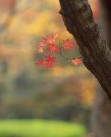 紅葉 23018054489| 写真素材・ストックフォト・画像・イラスト素材|アマナイメージズ