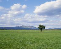 一本の樹 23018054850| 写真素材・ストックフォト・画像・イラスト素材|アマナイメージズ