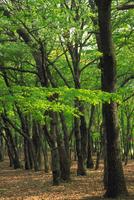 雑木林(ぞうきばやし) 23018054968| 写真素材・ストックフォト・画像・イラスト素材|アマナイメージズ