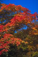 紅葉 23018055012| 写真素材・ストックフォト・画像・イラスト素材|アマナイメージズ