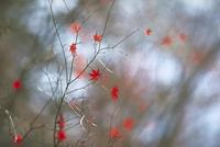 紅葉 23018055016| 写真素材・ストックフォト・画像・イラスト素材|アマナイメージズ
