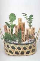 春の七草(寄せ植え)