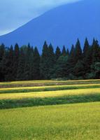 稲田 23018055460| 写真素材・ストックフォト・画像・イラスト素材|アマナイメージズ