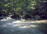奥入瀬渓流 23018055477| 写真素材・ストックフォト・画像・イラスト素材|アマナイメージズ