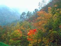 雨の紅葉 23018055480| 写真素材・ストックフォト・画像・イラスト素材|アマナイメージズ
