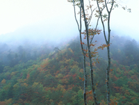 雨の紅葉 23018055484| 写真素材・ストックフォト・画像・イラスト素材|アマナイメージズ