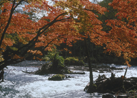 奥入瀬渓流 23018055581| 写真素材・ストックフォト・画像・イラスト素材|アマナイメージズ