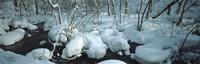 奥入瀬渓流 23018055586| 写真素材・ストックフォト・画像・イラスト素材|アマナイメージズ