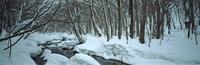 奥入瀬渓流 23018055593| 写真素材・ストックフォト・画像・イラスト素材|アマナイメージズ