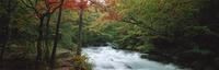奥入瀬渓流 23018055599| 写真素材・ストックフォト・画像・イラスト素材|アマナイメージズ