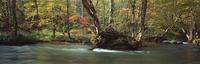 奥入瀬渓流 23018055601| 写真素材・ストックフォト・画像・イラスト素材|アマナイメージズ