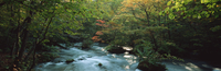 奥入瀬渓流 23018055602| 写真素材・ストックフォト・画像・イラスト素材|アマナイメージズ
