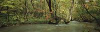 奥入瀬渓流 23018055603| 写真素材・ストックフォト・画像・イラスト素材|アマナイメージズ