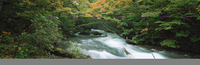 奥入瀬渓流 23018055604| 写真素材・ストックフォト・画像・イラスト素材|アマナイメージズ