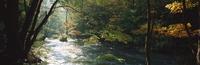 奥入瀬渓流 23018055606| 写真素材・ストックフォト・画像・イラスト素材|アマナイメージズ