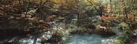 奥入瀬渓流 23018055607| 写真素材・ストックフォト・画像・イラスト素材|アマナイメージズ