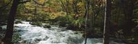 奥入瀬渓流 23018055608| 写真素材・ストックフォト・画像・イラスト素材|アマナイメージズ