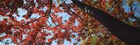 奥入瀬渓流 23018055609| 写真素材・ストックフォト・画像・イラスト素材|アマナイメージズ