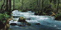 奥入瀬渓流 23018055612| 写真素材・ストックフォト・画像・イラスト素材|アマナイメージズ