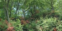 奥入瀬渓流 23018055613| 写真素材・ストックフォト・画像・イラスト素材|アマナイメージズ