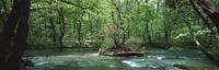 奥入瀬渓流 23018055620| 写真素材・ストックフォト・画像・イラスト素材|アマナイメージズ