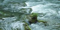 奥入瀬渓流 23018055623| 写真素材・ストックフォト・画像・イラスト素材|アマナイメージズ