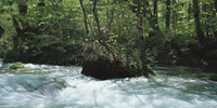奥入瀬渓流 23018055626| 写真素材・ストックフォト・画像・イラスト素材|アマナイメージズ