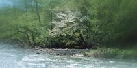 奥入瀬渓流 23018055627| 写真素材・ストックフォト・画像・イラスト素材|アマナイメージズ